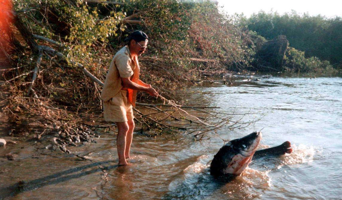 рыба какую ловят в реке видео